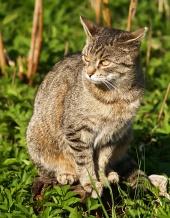Kočka sedí na pařezu v trávě