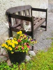 Kočka odpočívá na lavičce venku