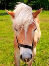Mladý kůň na zelené louce