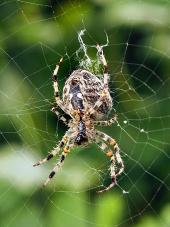Pohled z blízka na pavouka jako tká svou síť