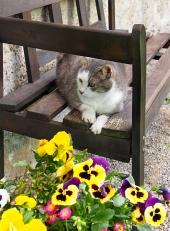 Kočka odpočívá na dřevěné lavici