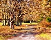 Pestrobarevný podzimní park
