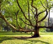Velmi starý strom