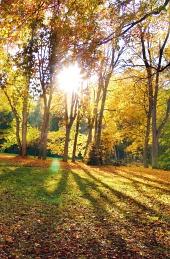 Slunce zářící mezi koruny stromů