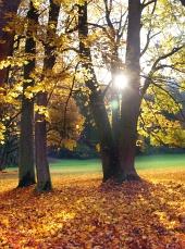 Paprsky slunce vykukují zpoza stromů