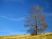 Osamocený strom na louce