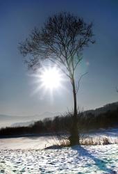 Strom a slunce