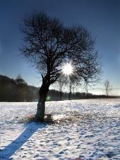 Strom a slunce během zimy