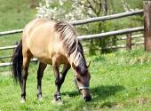 Kůň se pase na louce