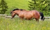Kůň na louce ve vysoké trávě