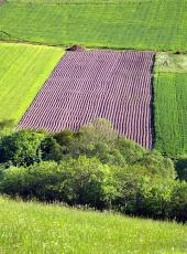 Zelená louka a pole