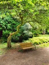 Lavička pod pokrouceným stromem v Turčianské Štiavničce na Slovensku