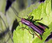Barevný hmyz na listu