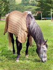 Kůň s přikrývkou se pase na cvičišti