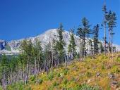 Zničený les ve Vysokých Tatrách