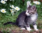 Kotě na zelené louce