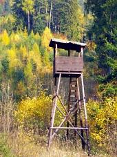 Lovecký posed v lese během podzimu