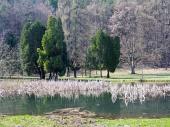 Park a jezero v Turčianské Štiavničce