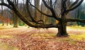 Prastarý masivní strom v parku