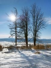 Stromy a slunce ve Vysokých Tatrách