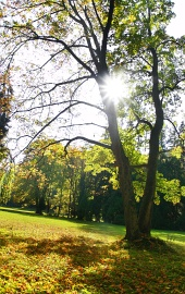 Slunce schované v koruně stromů