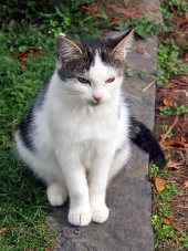 Roztomilá kočka sedí na obrubníku
