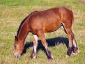 Mladé koně se pasou na louce
