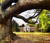 Masivní strom ve staré botanické zahradě