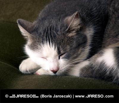 Portrét spící kočky