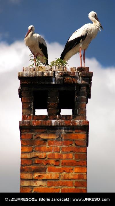 Dva čápi bílé na komíně z blízka
