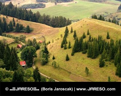 Osamocené domky v lese