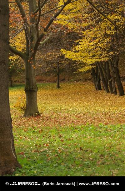 Podzimní park u lázeňských domů v obci Lúčky