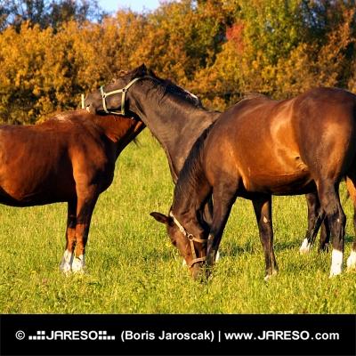 Tři koně na zelené louce
