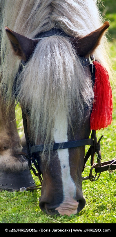 Kůň s červenou růžicí