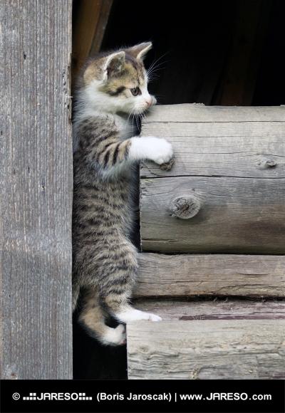 Kotě se šplhá po dřevě