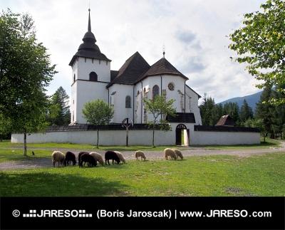 Gotický kostel v Pribylině s ovcemi