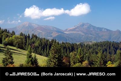 Les nad obcí Jasenová a Malá Fatra v dálce