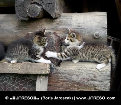 Koťata se hrají na naskládaném dříví