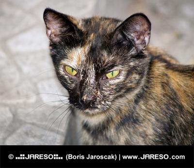 Portrét strakaté zatoulané kočky